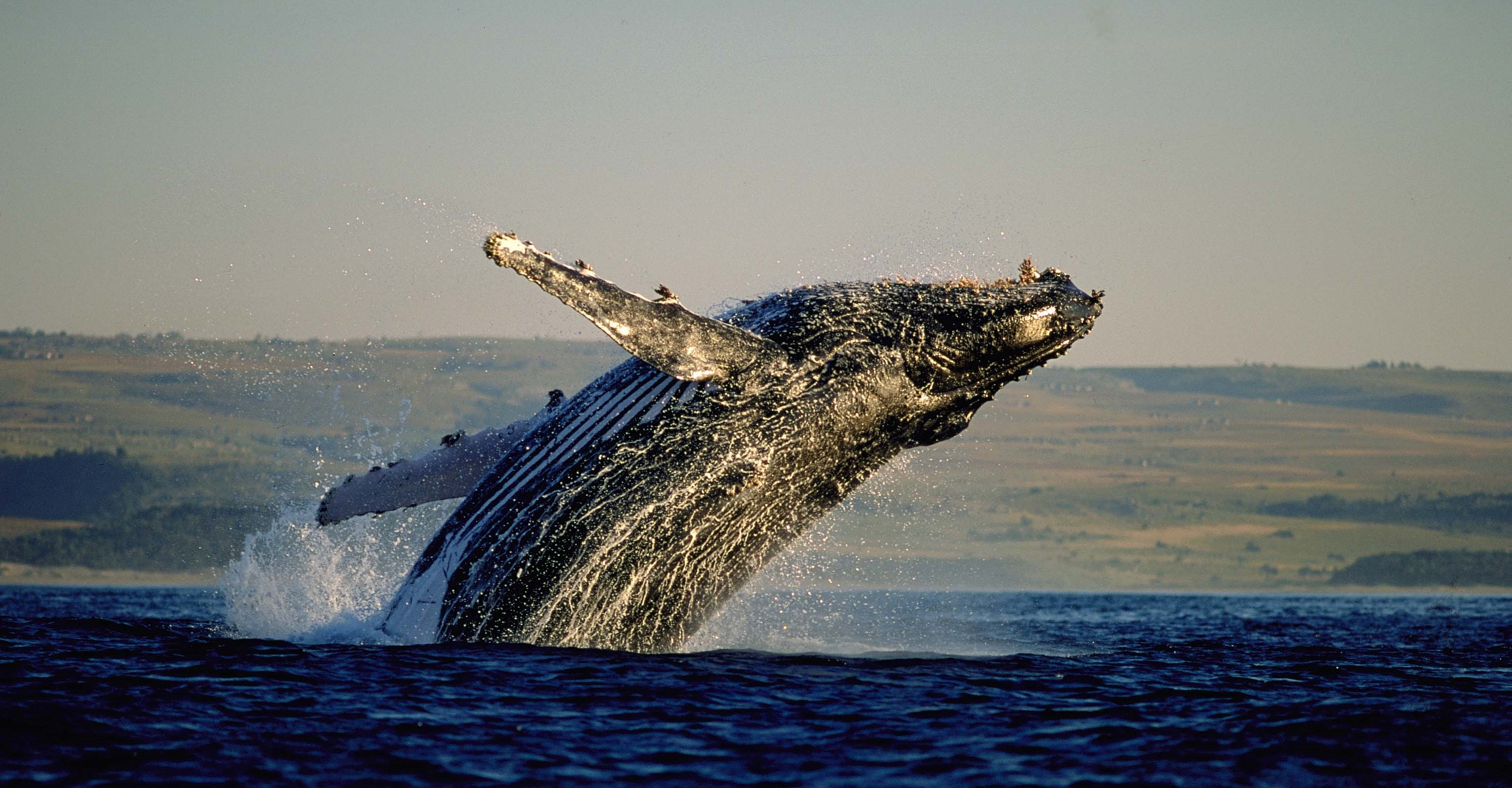 things-to-do-cape-town-winter-whale-watching