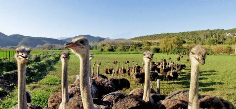 ct-things-to-do-ostrich-farm
